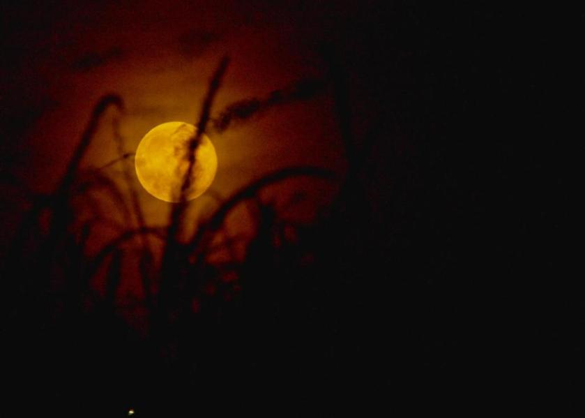 Autumn moon 5x7 CRW_2298